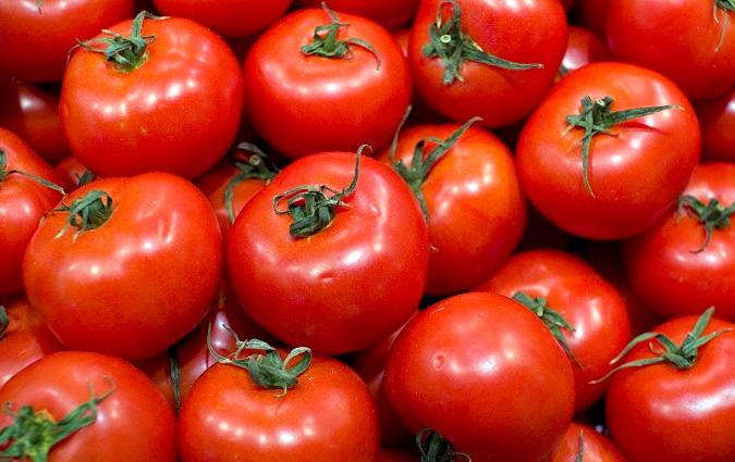 kairouan une r colte de tomates exceptionnelle d truite par la chaleur. Black Bedroom Furniture Sets. Home Design Ideas